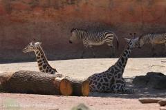 Zoo_Hannover_060614_IMG_9430