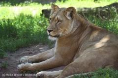 Zoo_Hannover_060614_IMG_9433