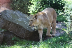 Zoo_Hannover_060614_IMG_9440