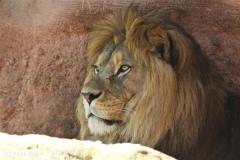 Zoo_Hannover_060614_IMG_9445