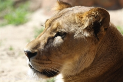 Zoo_Hannover_060614_IMG_9454