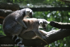 Zoo_Hannover_060614_IMG_9473