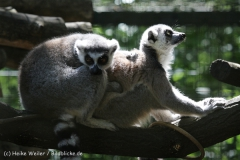 Zoo_Hannover_060614_IMG_9478