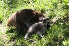 Zoo_Hannover_060614_IMG_9499