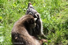 Zoo_Hannover_060614_IMG_9501