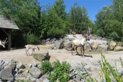 Zoo_Hannover_060614_IMG_9503_4926