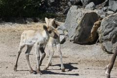 Zoo_Hannover_060614_IMG_9506