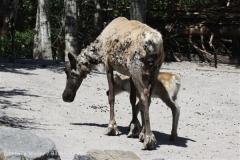 Zoo_Hannover_060614_IMG_9513
