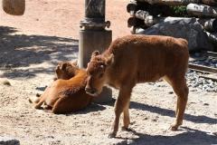Zoo_Hannover_060614_IMG_9544