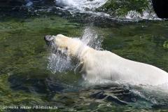 Zoo_Hannover_060614_IMG_9632