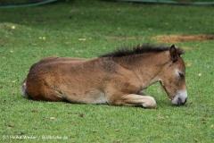 Zoo_Hannover_060812_IMG_1595-2