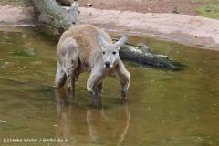 Zoo_Hannover_060812_IMG_1602