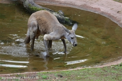 Zoo_Hannover_060812_IMG_1605