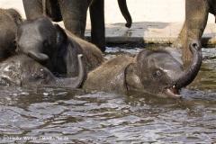 Zoo_Hannover_060812_IMG_1703