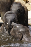 Zoo_Hannover_060812_IMG_1712