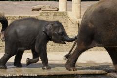 Zoo_Hannover_060812_IMG_1720