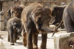 Zoo_Hannover_060812_IMG_1780