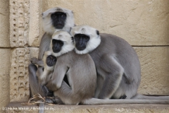 Zoo_Hannover_060812_IMG_1803-2