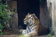 Zoo_Hannover_060812_IMG_1809
