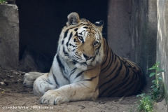 Zoo_Hannover_060812_IMG_1813-2