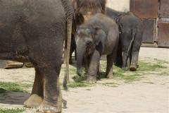 Zoo_Hannover_060812_IMG_1819-2