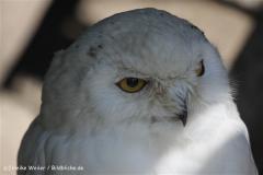 Zoo_Hannover_060812_IMG_1831-2