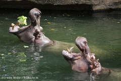 Zoo_Hannover_060812_IMG_2122