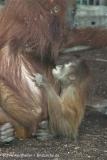 Zoo_Hannover_070314_IMG_6332