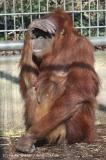 Zoo_Hannover_070314_IMG_6361