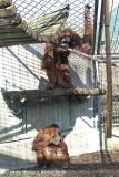 Zoo_Hannover_070314_IMG_6369