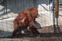 Zoo_Hannover_070314_IMG_6373