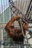 Zoo_Hannover_070314_IMG_6377