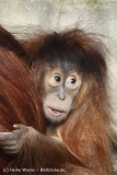 Zoo_Hannover_070314_IMG_6391