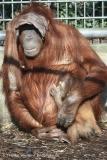 Zoo_Hannover_070314_IMG_6399