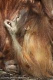 Zoo_Hannover_070314_IMG_6404