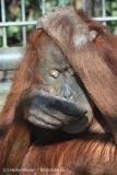Zoo_Hannover_070314_IMG_6407