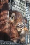 Zoo_Hannover_070314_IMG_6418