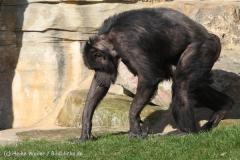 Zoo_Hannover_070314_IMG_6424