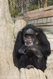 Zoo_Hannover_070314_IMG_6439