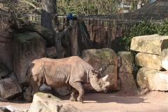 Zoo_Hannover_070314_IMG_6458