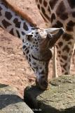Zoo_Hannover_070314_IMG_6464