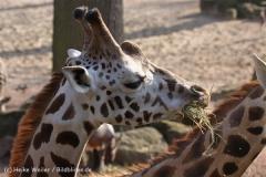Zoo_Hannover_070314_IMG_6469