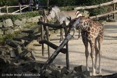 Zoo_Hannover_070314_IMG_6472