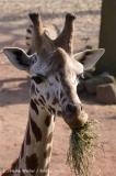 Zoo_Hannover_070314_IMG_6478