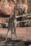 Zoo_Hannover_070314_IMG_6483