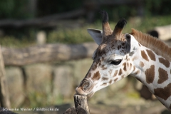 Zoo_Hannover_070314_IMG_6507