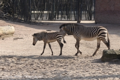 Zoo_Hannover_070314_IMG_6511