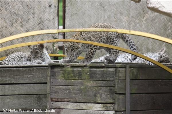 Zoo_Hannover_070912_IMG_2872