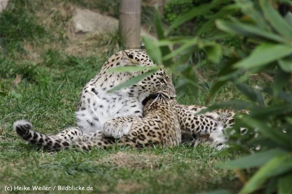 Zoo_Hannover_070912_IMG_2920-2
