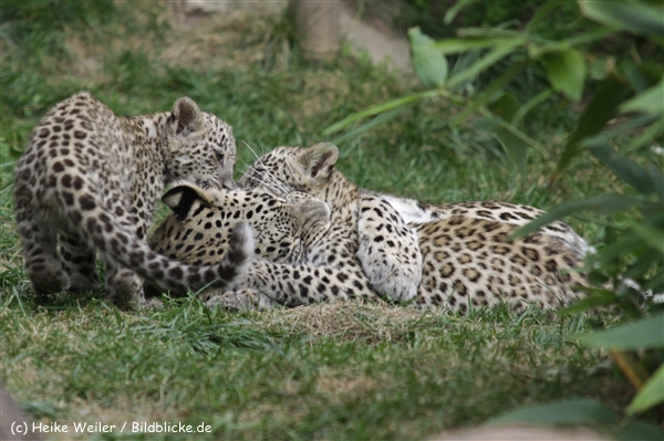 Zoo_Hannover_070912_IMG_2938